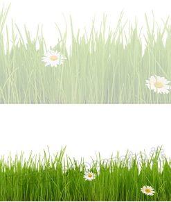 vetrofania con erba e margherite