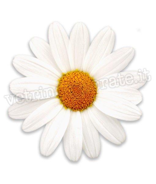 adesivo con fiore-margherita