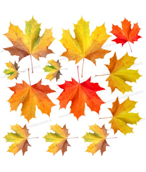 gruppo-di-foglie-autunnali