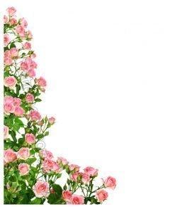vetrofania roseto angolare