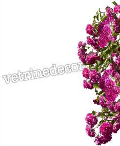 spalliera di rose rampicanti