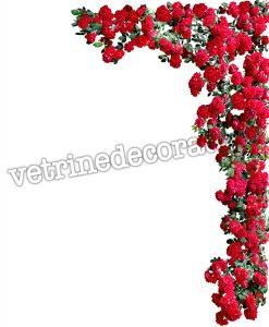 roseto con rose rosse