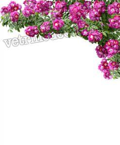 decorazione angolare con rose