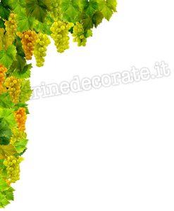 pergolato con uva matura e pampini verdi