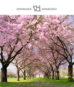 viale con alberi fioriti