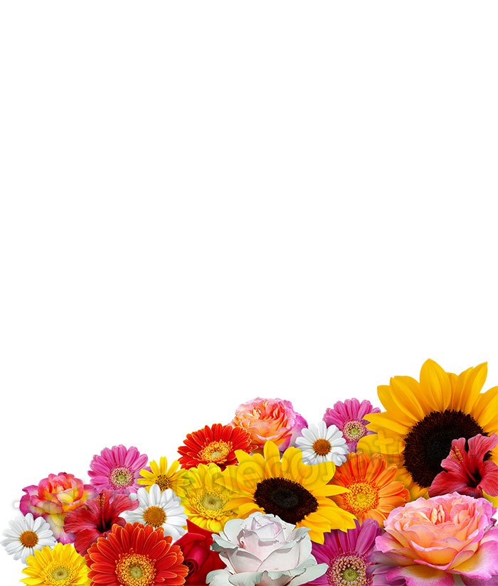 Floral Spring Decoration With Colourful Flowers Of Various Types