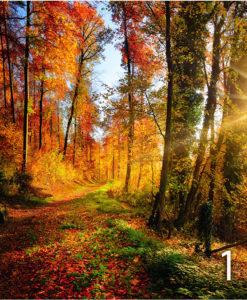 strada-campagna-autunno-1
