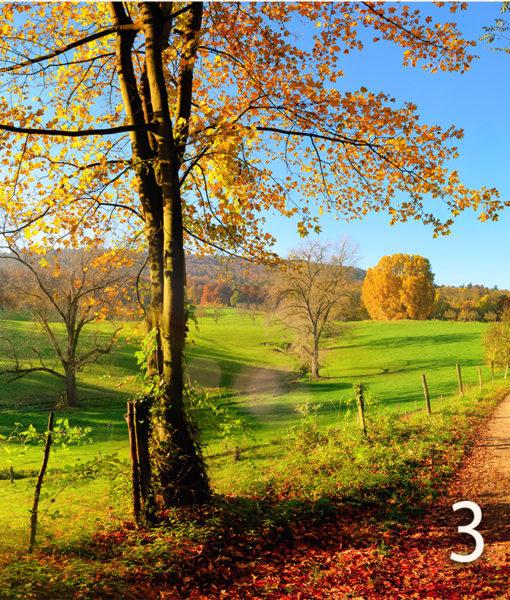 strada-campagna-autunno-3