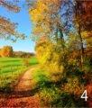 strada-campagna-autunno-4