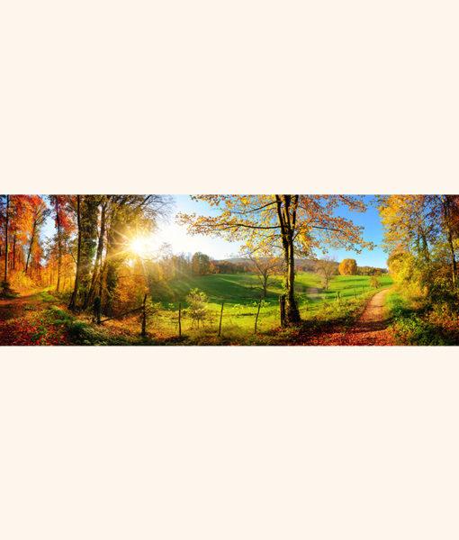 strada-campagna-autunno-intera