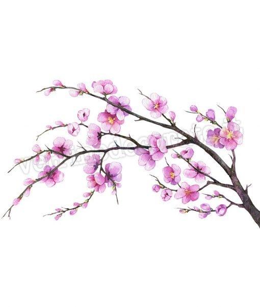 Rami-Pesco-fiorito