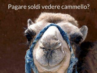 pagare soldi vedere cammello